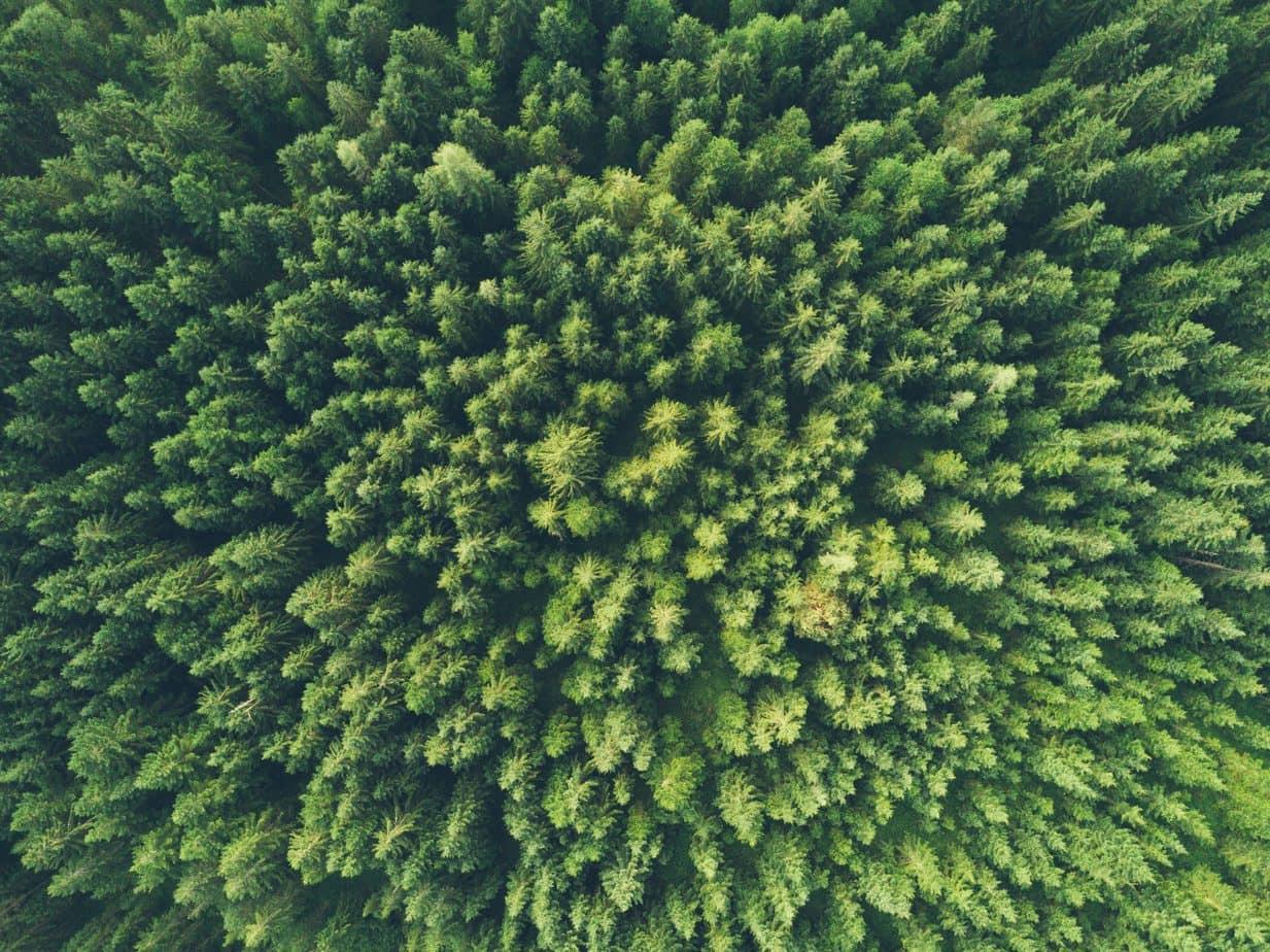 PEF - woods
